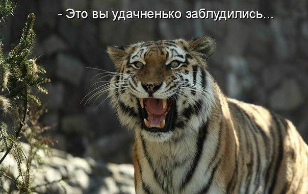 http://s3.uploads.ru/cnRT1.jpg
