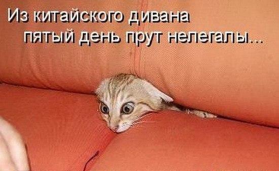 http://s3.uploads.ru/eKAJq.jpg