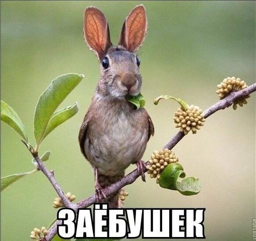 http://s3.uploads.ru/f4yaM.jpg