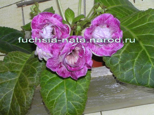 http://s3.uploads.ru/frnB6.jpg