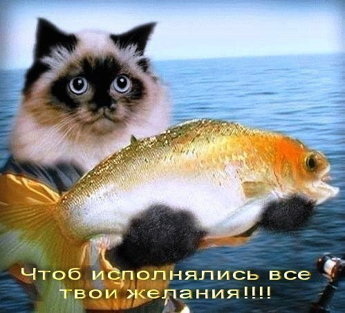 http://s3.uploads.ru/g1fjZ.jpg