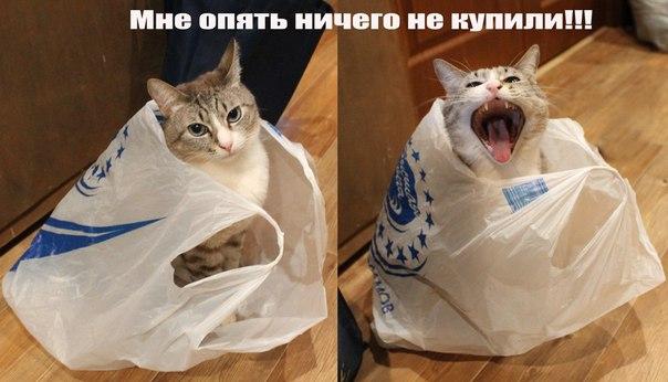 http://s3.uploads.ru/gj0S3.jpg