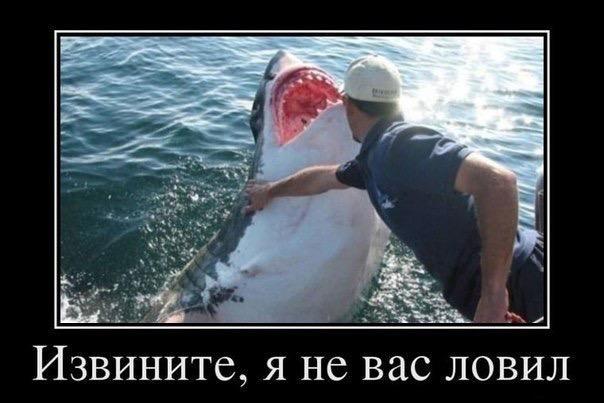http://s3.uploads.ru/hIQfo.jpg