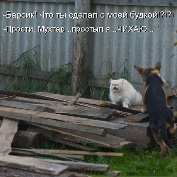 http://s3.uploads.ru/hTgFJ.jpg