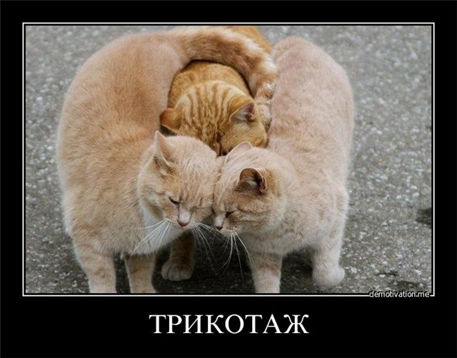 http://s3.uploads.ru/hzqCT.jpg