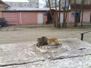 http://s3.uploads.ru/i/o2g7v.jpg
