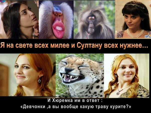 http://s3.uploads.ru/iU4xf.jpg