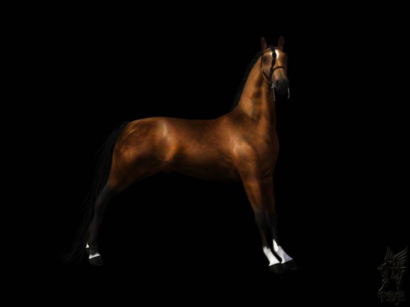 Регистрация лошадей в RHF 1.1 KHAEL