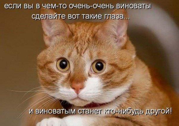 http://s3.uploads.ru/kpL9R.jpg