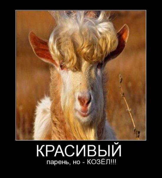 http://s3.uploads.ru/lAtFo.jpg