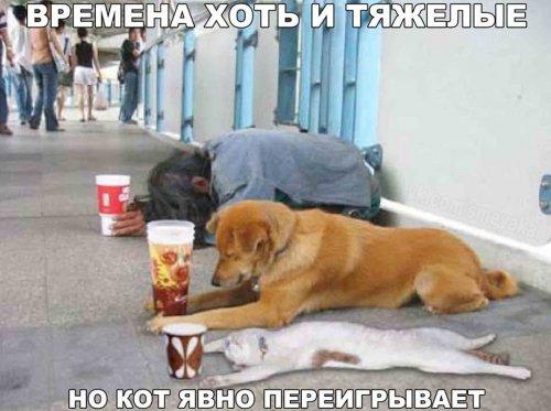 http://s3.uploads.ru/lyXJt.jpg