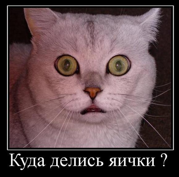 http://s3.uploads.ru/nrNf3.jpg