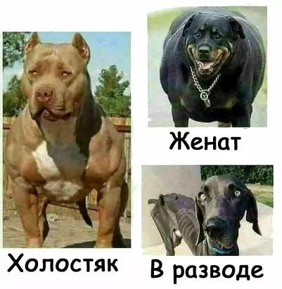 http://s3.uploads.ru/oknTs.jpg
