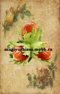 http://s3.uploads.ru/osnUw.jpg
