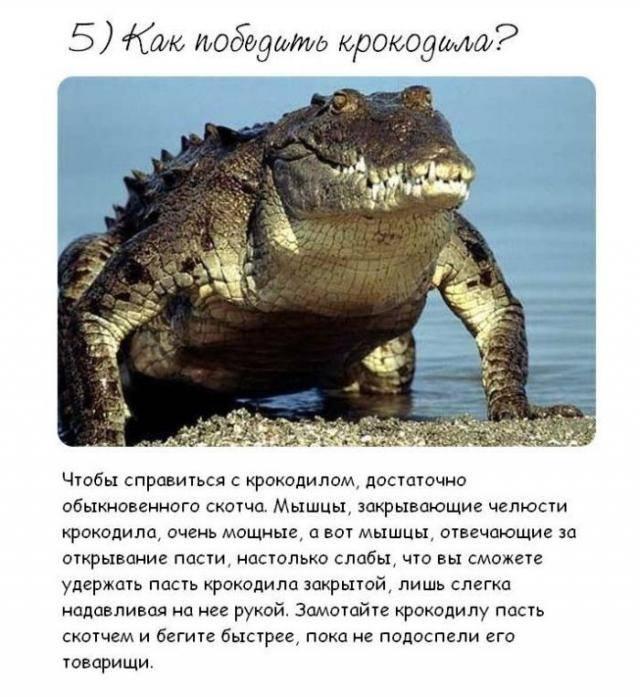 http://s3.uploads.ru/pFWGr.jpg