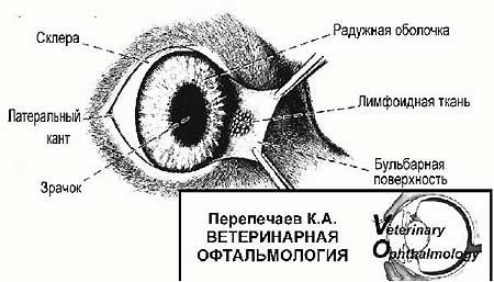 http://s3.uploads.ru/qn41s.jpg