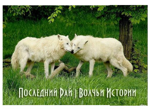http://s3.uploads.ru/rKBE5.png