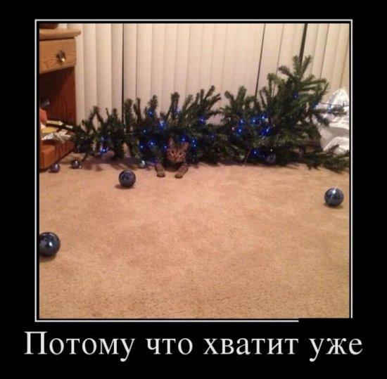 http://s3.uploads.ru/rxfek.jpg