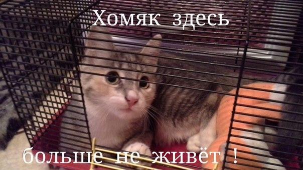 http://s3.uploads.ru/sADLd.jpg