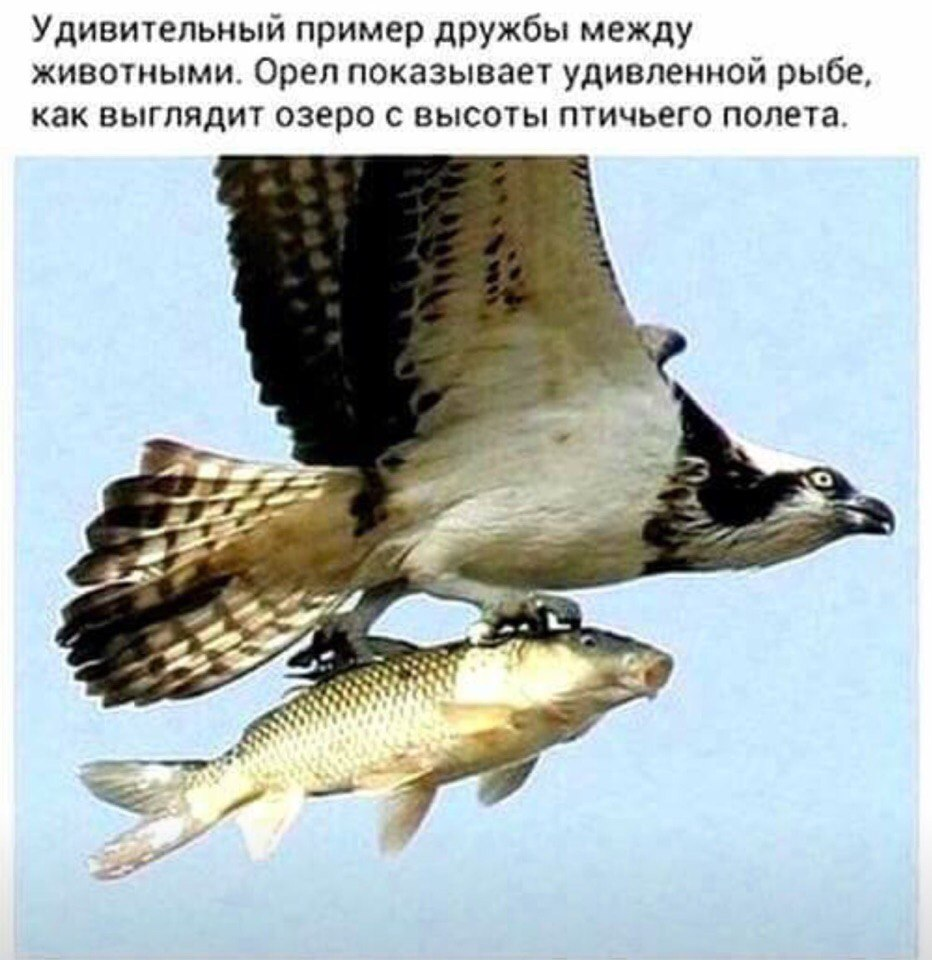 http://s3.uploads.ru/siM2C.jpg