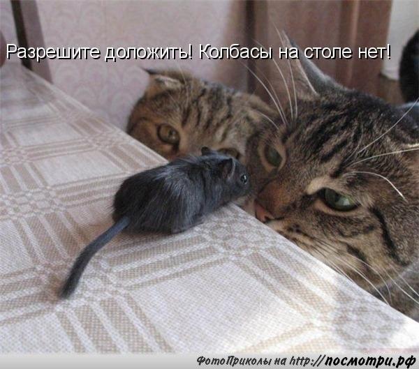 http://s3.uploads.ru/srqKD.jpg