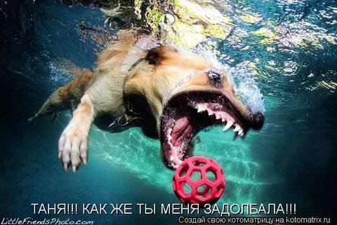 http://s3.uploads.ru/t/0AH9k.jpg