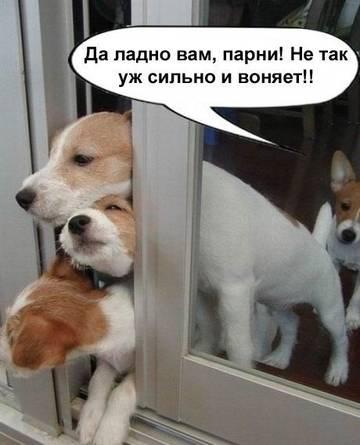http://s3.uploads.ru/t/0OG9c.jpg