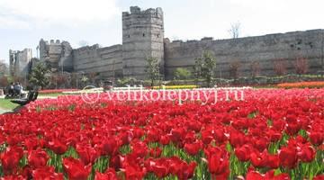 http://s3.uploads.ru/t/0dDPQ.jpg