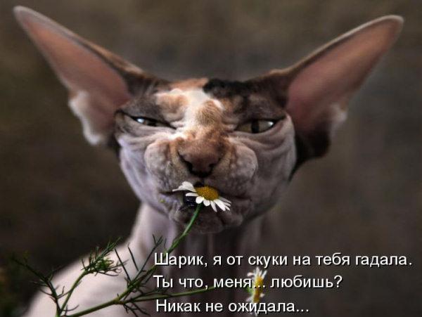 http://s3.uploads.ru/t/0zSTL.jpg