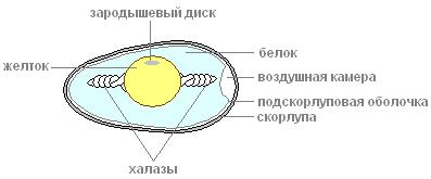 http://s3.uploads.ru/t/1hZra.png