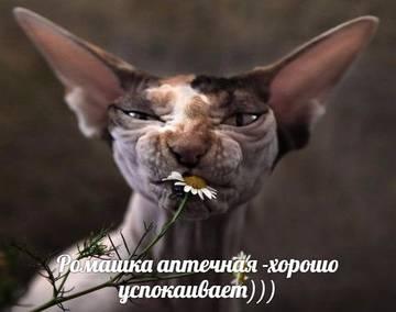 http://s3.uploads.ru/t/1skxF.jpg