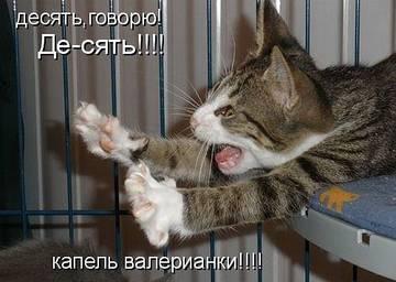 http://s3.uploads.ru/t/1uFRE.jpg