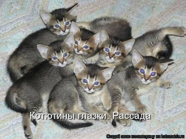 http://s3.uploads.ru/t/1zdXZ.jpg