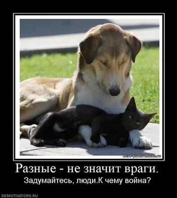 http://s3.uploads.ru/t/28V6w.jpg