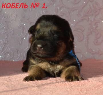 http://s3.uploads.ru/t/2ASCI.jpg