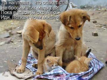 http://s3.uploads.ru/t/3h8Fa.jpg