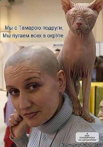 http://s3.uploads.ru/t/4FijB.jpg