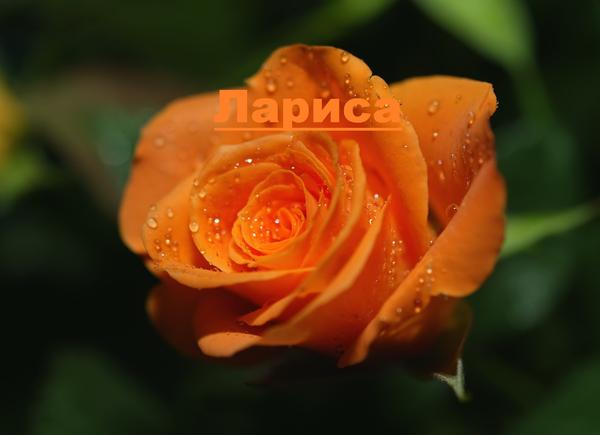 ЧАТ - ЛЕКАРСТВО ОТ БЕЗЫСХОДНОСТИ - КОПИЯ - НОЧЬ 18-19/11/09