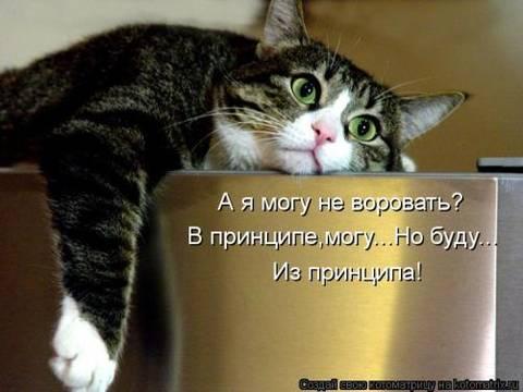 http://s3.uploads.ru/t/5ty0K.jpg