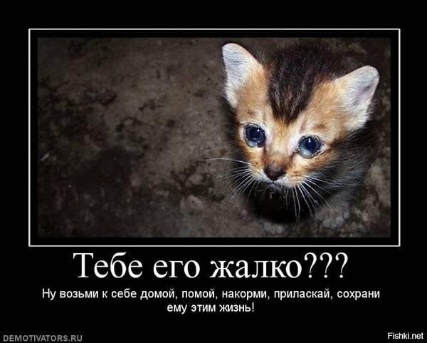http://s3.uploads.ru/t/5vWwg.jpg