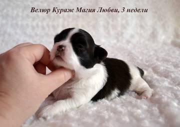 http://s3.uploads.ru/t/6IAED.jpg