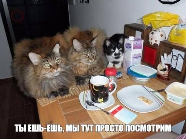 http://s3.uploads.ru/t/6LRp4.jpg