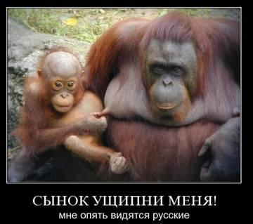 http://s3.uploads.ru/t/76Tzk.jpg
