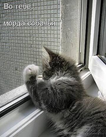 http://s3.uploads.ru/t/7JTYN.jpg