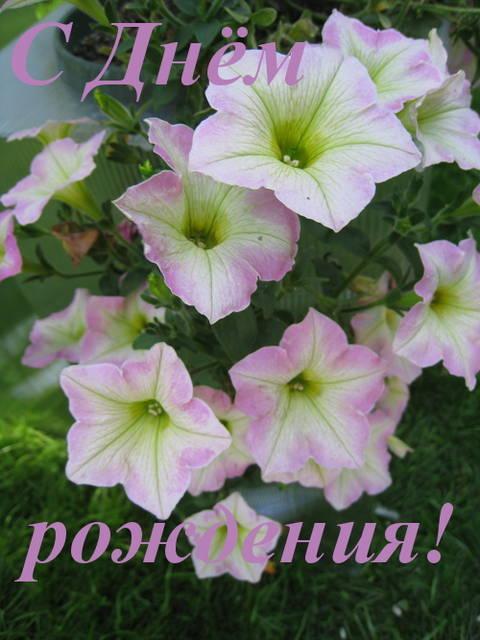 http://s3.uploads.ru/t/7p4Gq.jpg