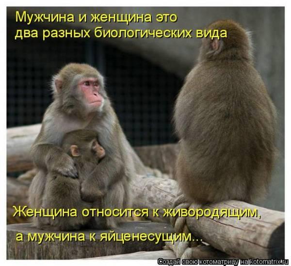 http://s3.uploads.ru/t/85dcX.jpg
