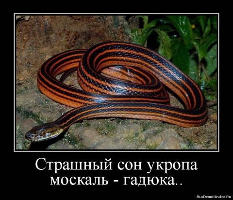 http://s3.uploads.ru/t/8gXyS.jpg