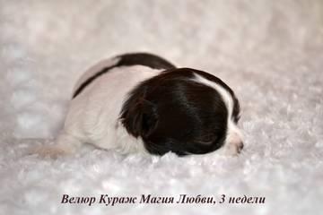 http://s3.uploads.ru/t/9efAM.jpg