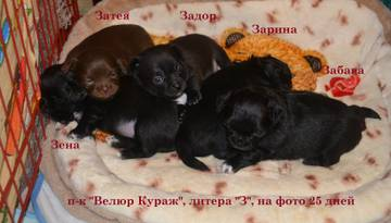 http://s3.uploads.ru/t/ANpjl.jpg