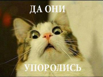 http://s3.uploads.ru/t/BNAo9.jpg